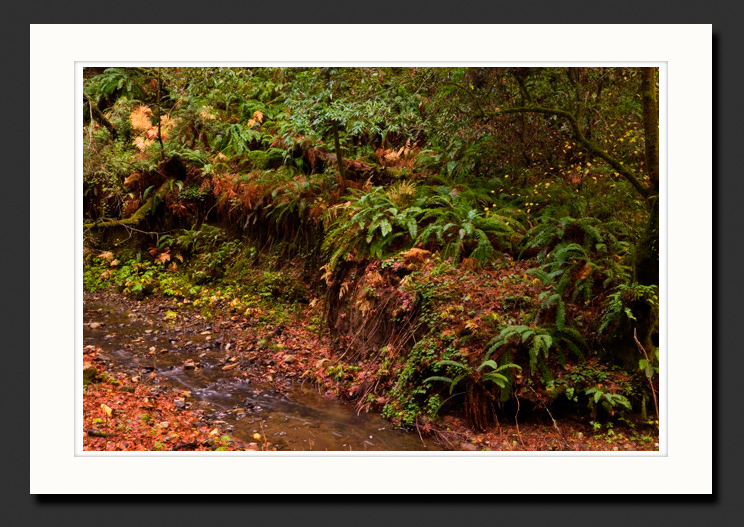 santa cruz mountains creek photograph