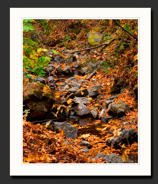 fall in northern california photograph