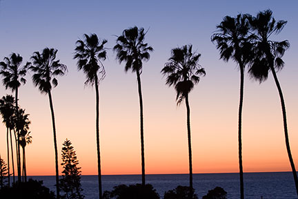 La Jolla Sunset over Palms